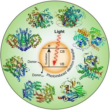 biologische oxidation chemie